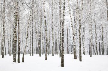 Winter Activities in PA